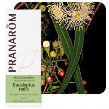 Huile essentielle Eucalyptus radié