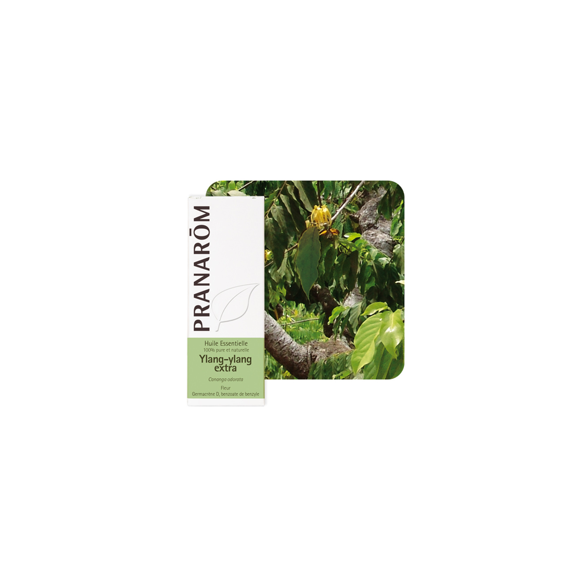 Huile essentielle Ylang Ylang extra