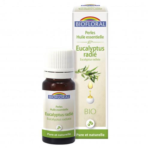 Perles d'huile essentielle Eucalyptus radié